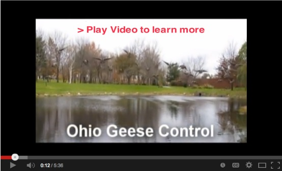 Play YouTube Ohio Geese Control Video